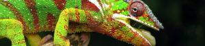 Holografischer Lack: Regenbogeneffekt, eine Lack mit wechselnder Farbe und irisierendem Finish.